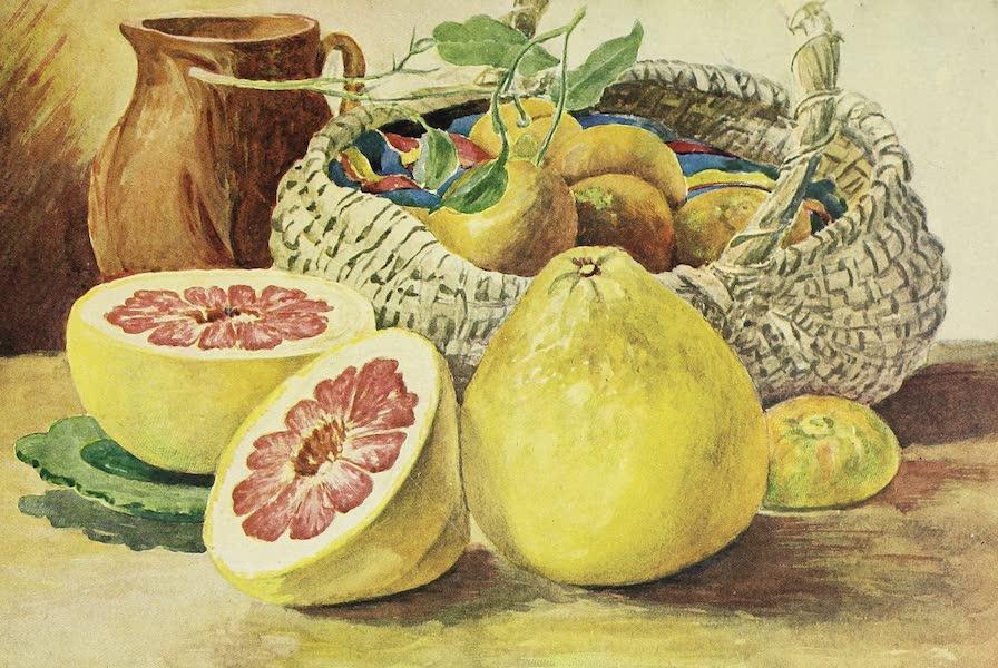 The Golden Caribbean - Shaddock, Tangerine, Orange (1900)