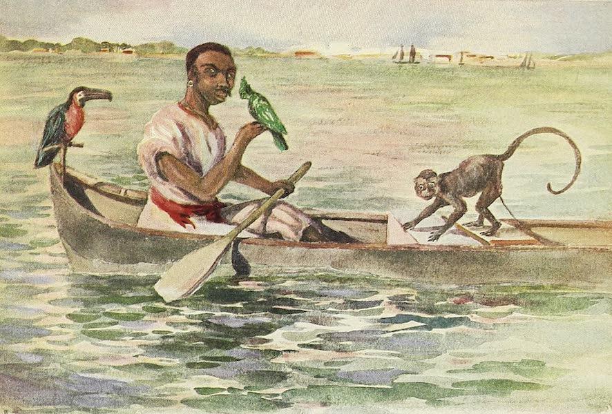 The Golden Caribbean - Cartagena Bird Seller (1900)