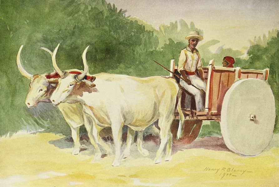 The Golden Caribbean - San Jose (Peon Market Cart) (1900)