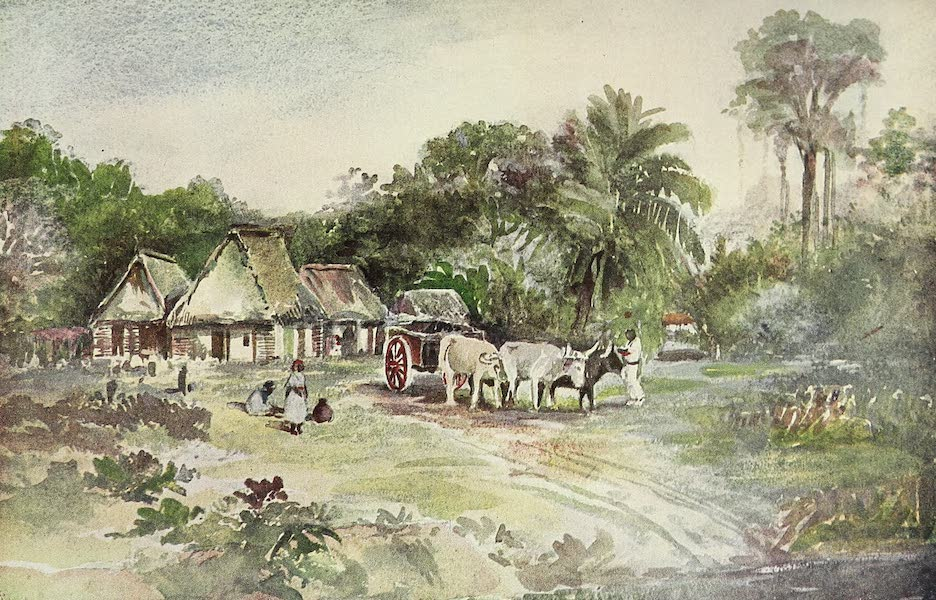 The Golden Caribbean - San Pedro Sula (1900)