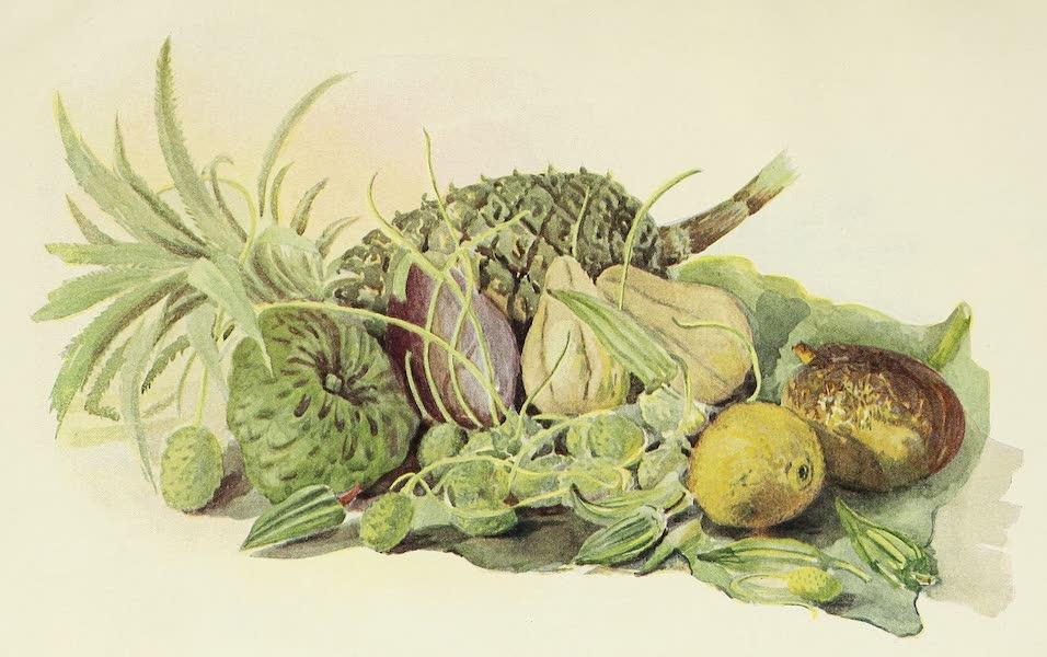 The Golden Caribbean - Black Pine, Cherrimoyer, Avacado Pear, etc.  (1900)