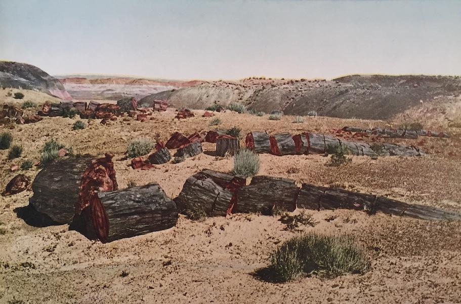 The Great Southwest - Petrified Forest, Arizona (1919)