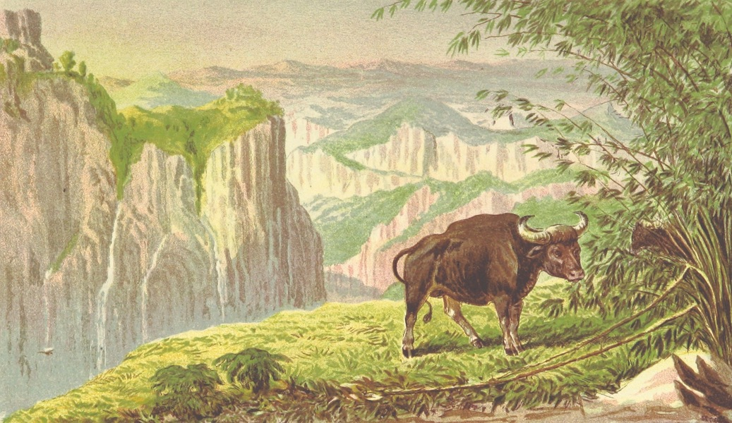 The Highlands of Central India - Bison on the Pachmarhi Hills - View Looking West (1871)