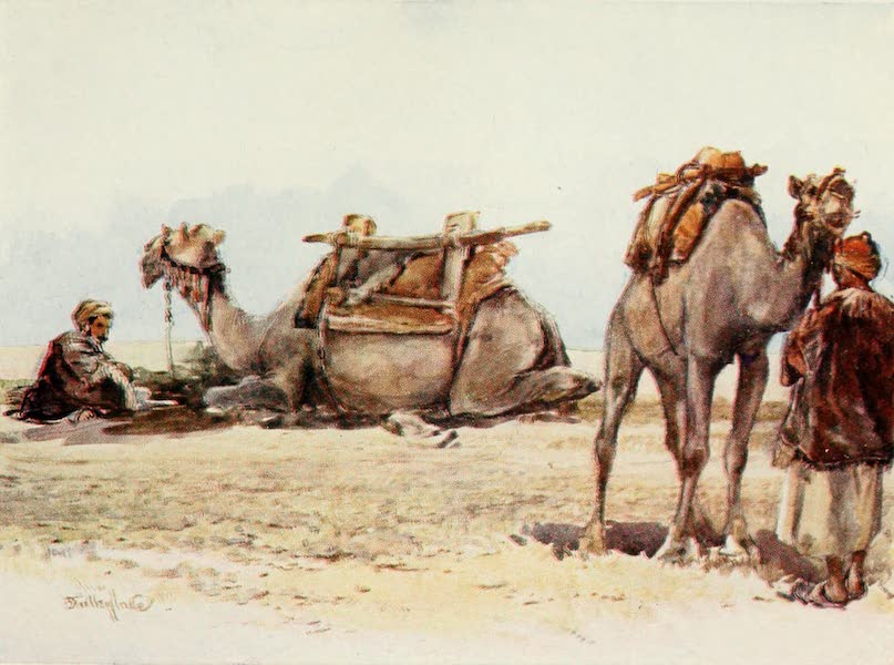 The Holy Land, Painted and Described - Study of Camels and Attendants (1902)