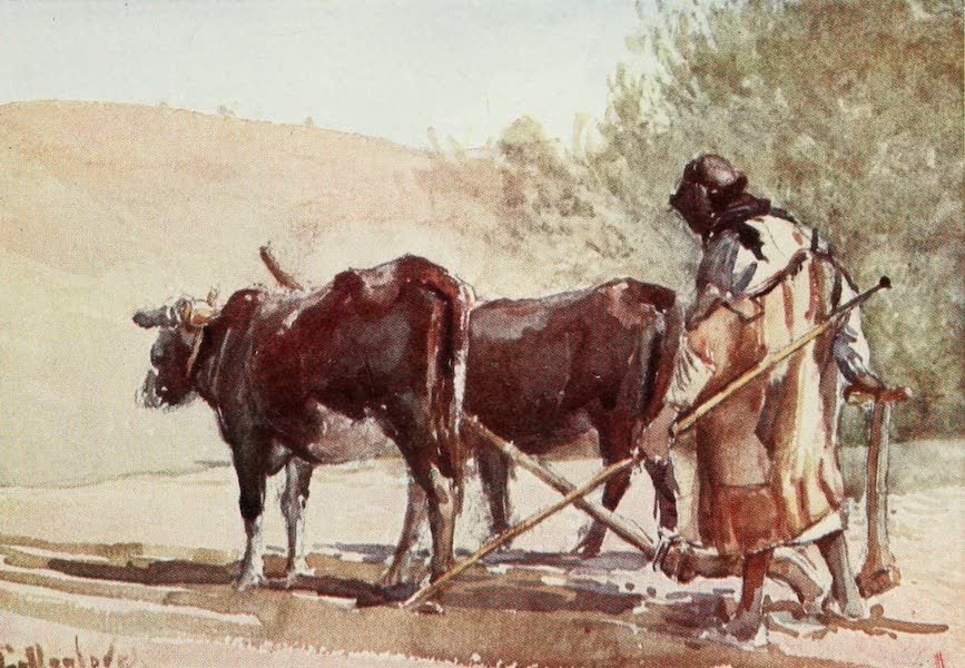 The Holy Land, Painted and Described - Ploughing on the Mount of Olives (1902)