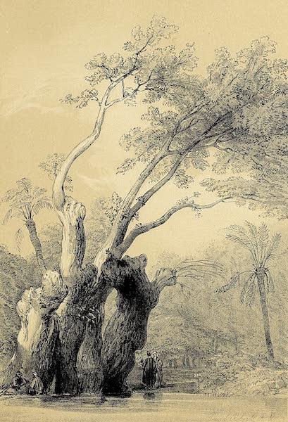 The Holy Land : Syria, Idumea, Arabia, Egypt & Nubia Vols. 5 & 6 - The Holy Tree of Metereah (1855)
