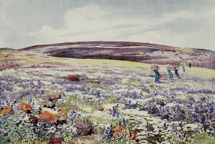 The Home of Fadeless Splendour or, Palestine of Today - A Field of Flowers in Galilee near Hattin (1921)