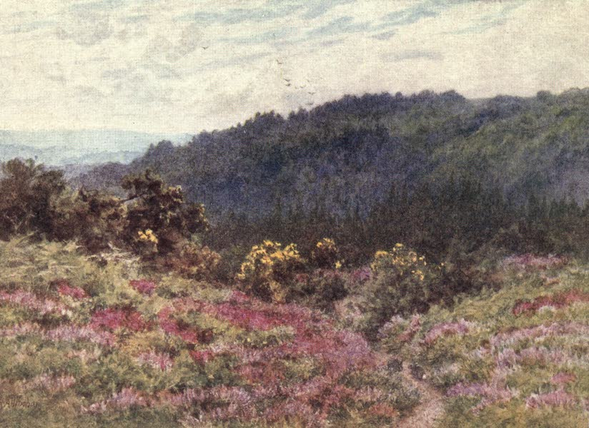 The Homes of Tennyson Painted and Described - Tennyson's Woods at Blackdown (1905)