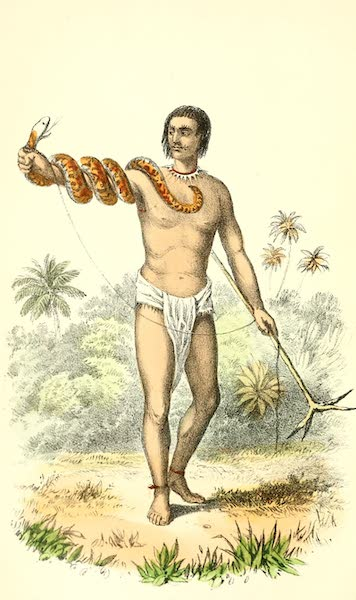 The Indian Tribes of Guiana - Snake Catcher (1868)