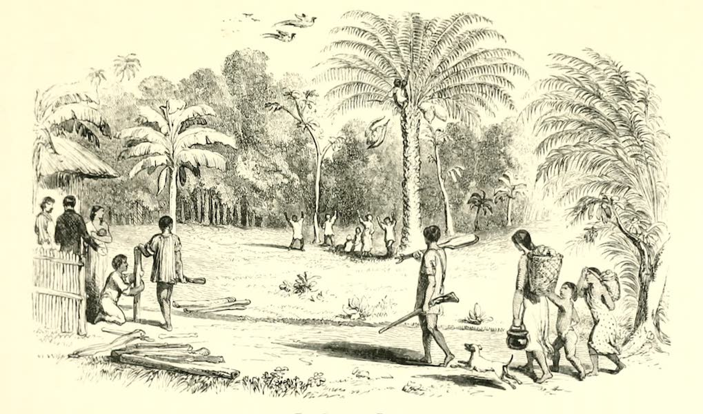 The Indian Tribes of Guiana - The Cokorito Palm (1868)