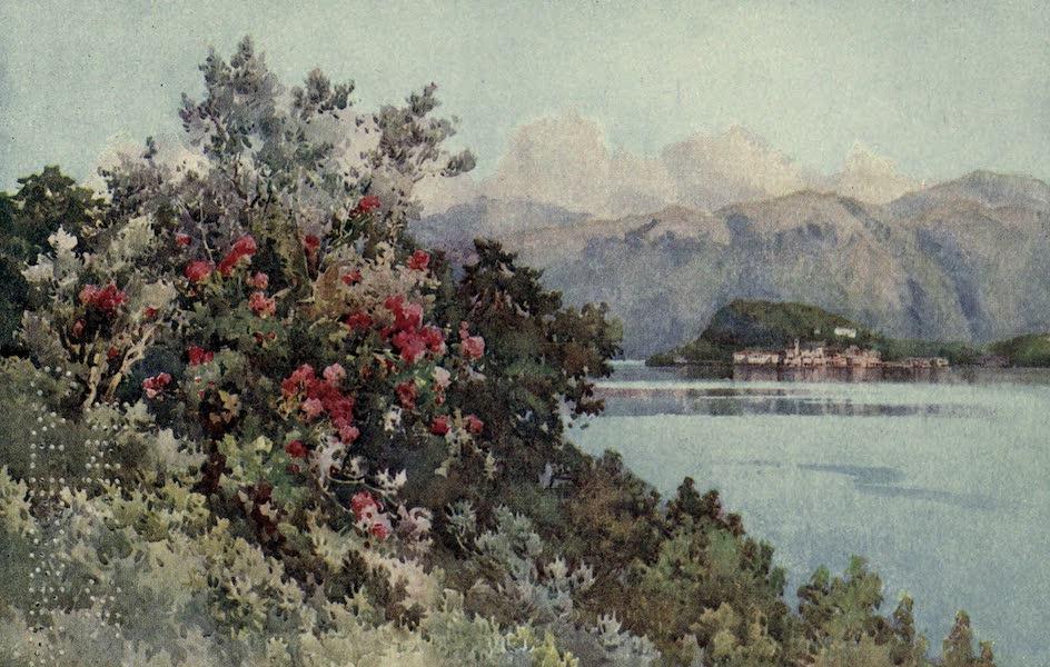 The Italian Lakes, Painted and Described - Roses, Villa Carlotta, Lago di Como (1912)