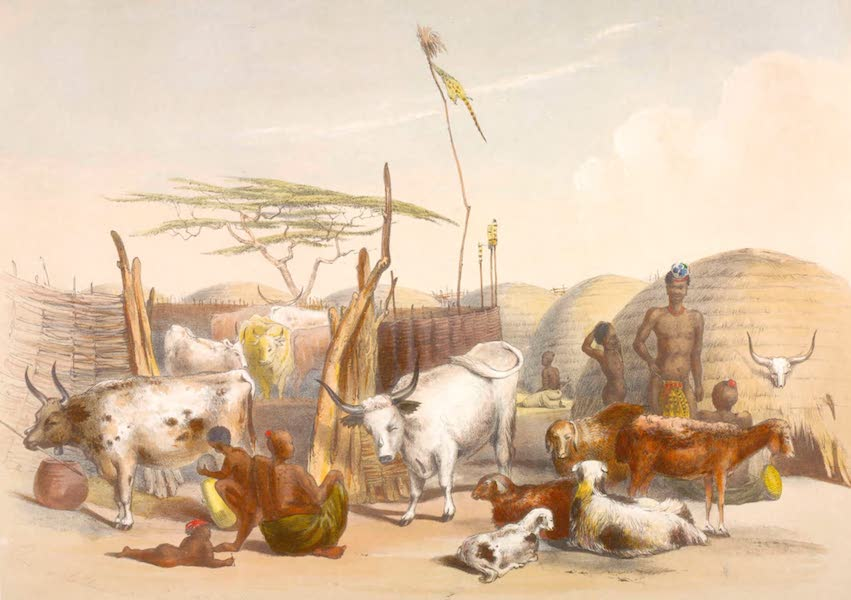 The Kafirs Illustrated in a Series of Drawings - Zulu Kraal on the Umgani with Cattle and Sheep (1849)