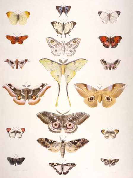 The Kafirs Illustrated in a Series of Drawings - New and Remarkable Species of Lepidoptera from Natal and the Zulu Country (1849)