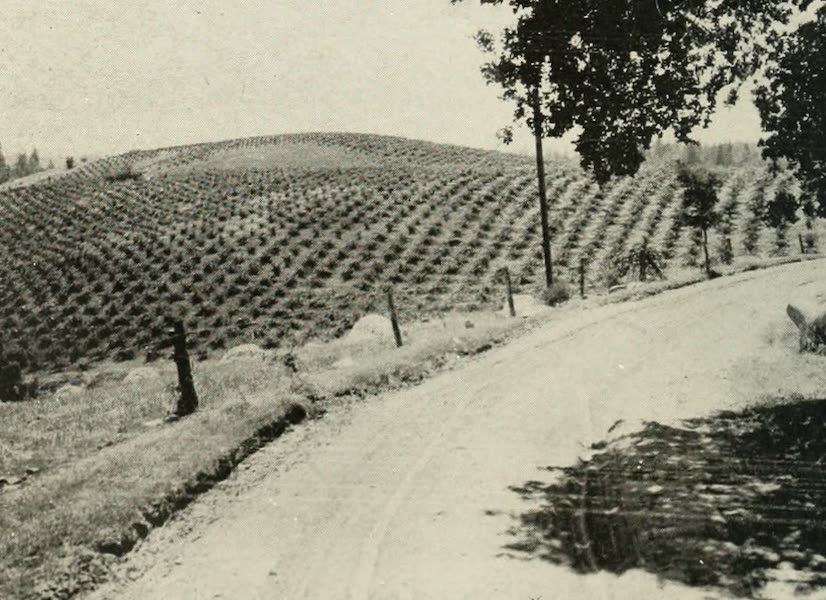 The Lake of the Sky, Lake Tahoe - Vineyard on the Automotive Highway between Placerville and Lake Tahoe (1915)