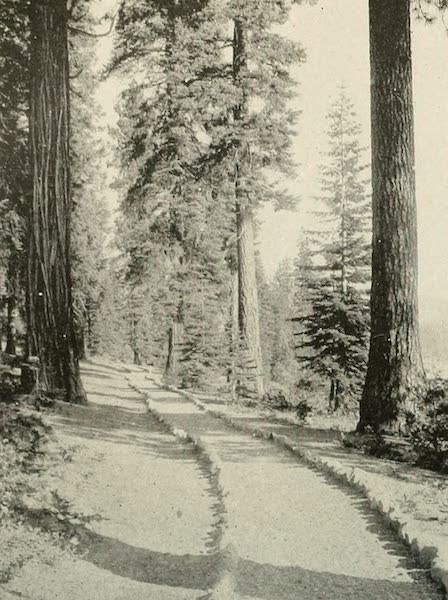 The Lake of the Sky, Lake Tahoe - Path in the Woods by Lake Tahoe, Tahoe Tavern (1915)