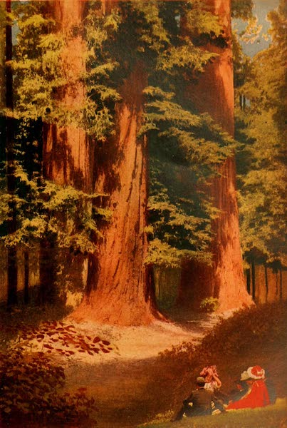 The Land of Living Color - The Sequoias of Santa Cruz (1915)