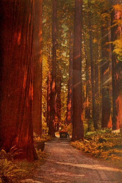 The Land of Living Color - A Hundred Miles of Redwoods (1915)