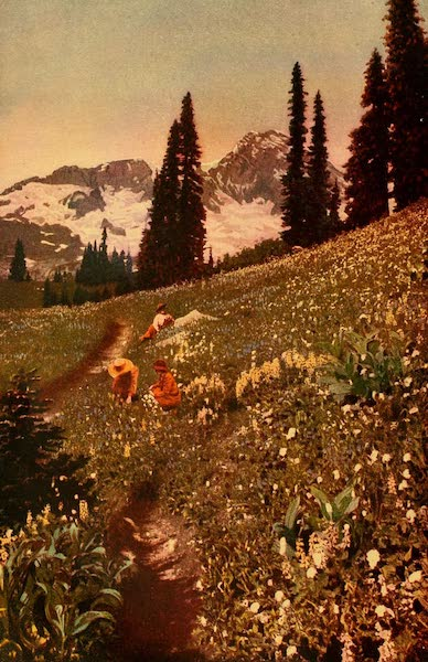 The Land of Living Color - A Floral Fairyland (1915)