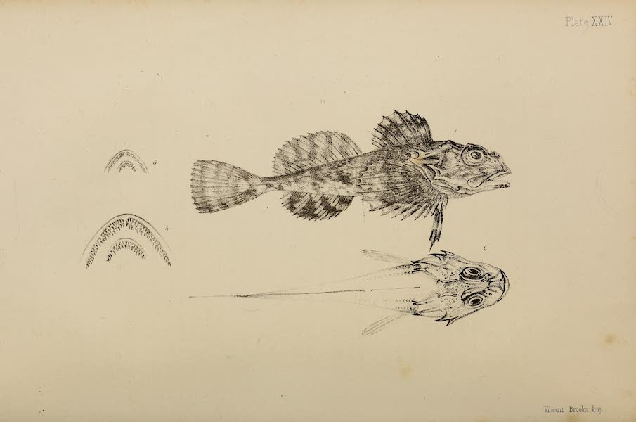 The Last of the Arctic Voyages Vol. 2 - Natural History Drawings I (1855)