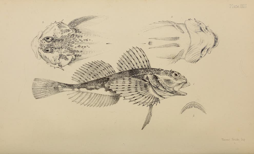 The Last of the Arctic Voyages Vol. 2 - Natural History Drawings II (1855)