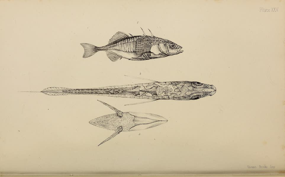 The Last of the Arctic Voyages Vol. 2 - Natural History Drawings III (1855)