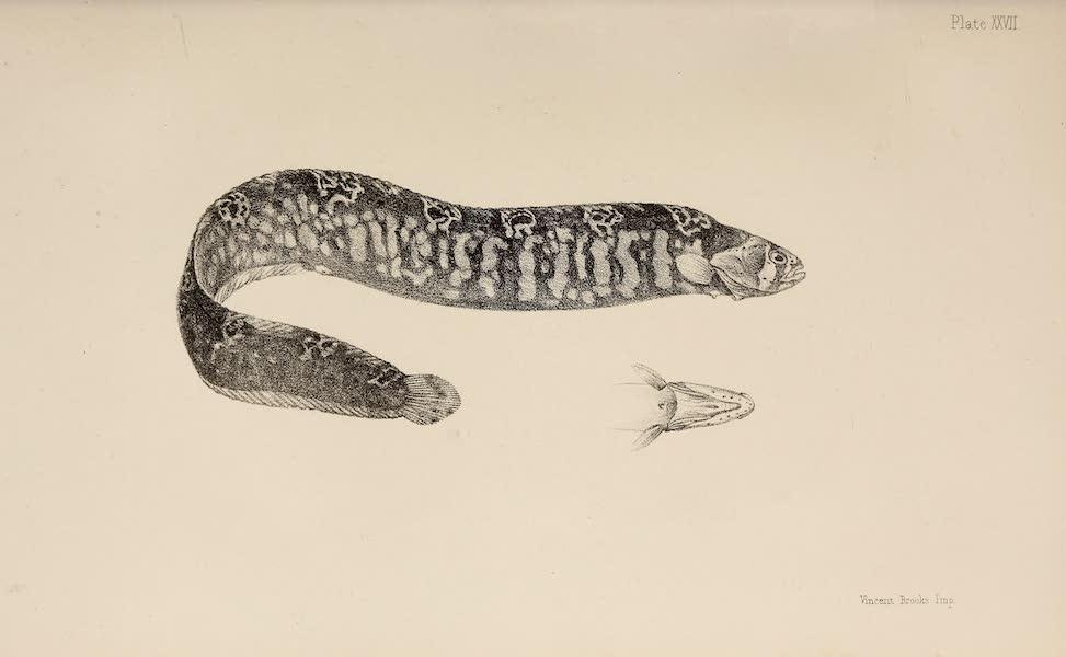 Natural History Drawings IV