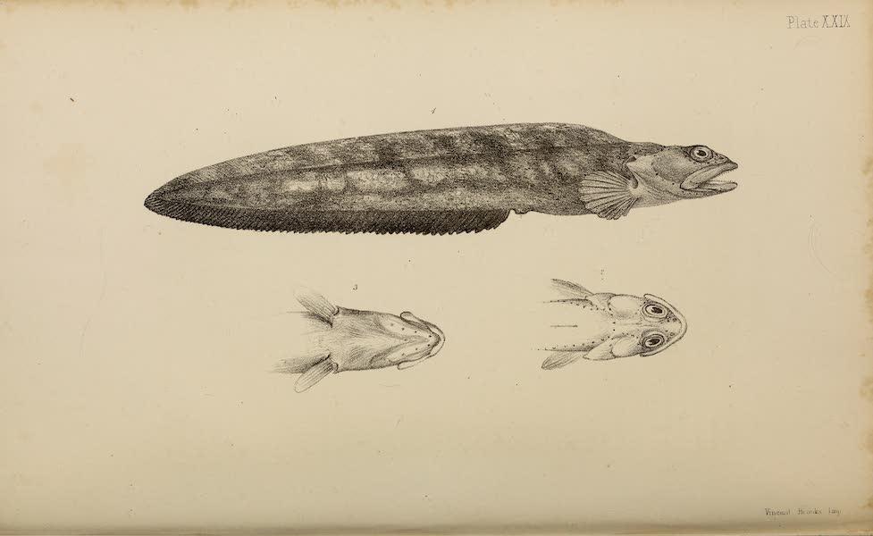 Natural History Drawings VII