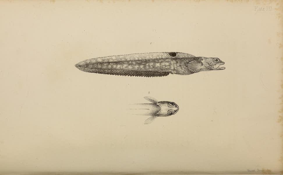 Natural History Drawings VIII