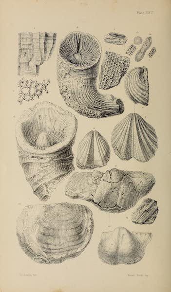 The Last of the Arctic Voyages Vol. 2 - Natural History Drawings IX (1855)