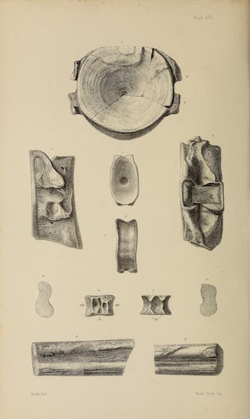 The Last of the Arctic Voyages Vol. 2 - Natural History Drawings X (1855)