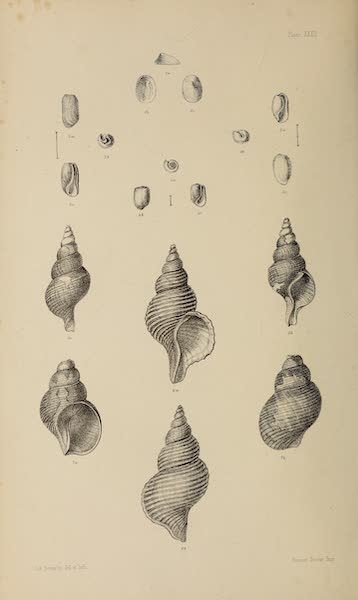 The Last of the Arctic Voyages Vol. 2 - Natural History Drawings XI (1855)