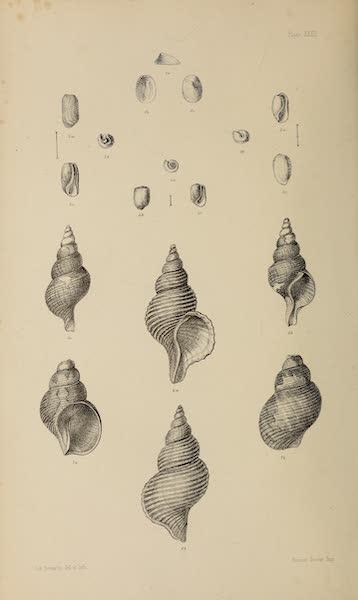 Natural History Drawings XI