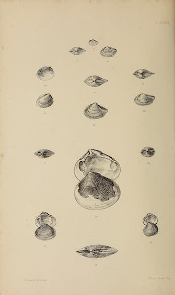 The Last of the Arctic Voyages Vol. 2 - Natural History Drawings XII (1855)