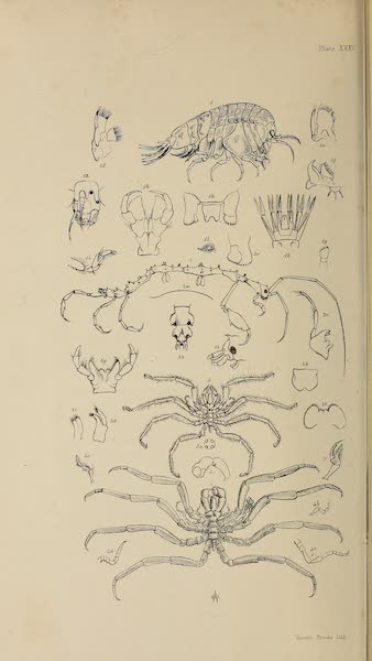 The Last of the Arctic Voyages Vol. 2 - Natural History Drawings XIV (1855)
