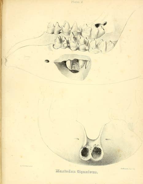The Mastodon Giganteus of North America - Mastodon giganteus - Plate II (1852)