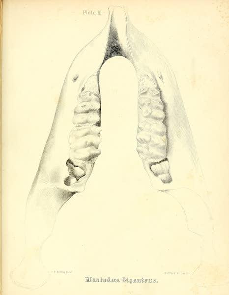 The Mastodon Giganteus of North America - Mastodon giganteus - Plate III (1852)