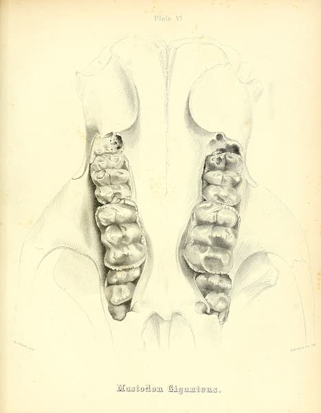 The Mastodon Giganteus of North America - Mastodon giganteus - Plate VI (1852)