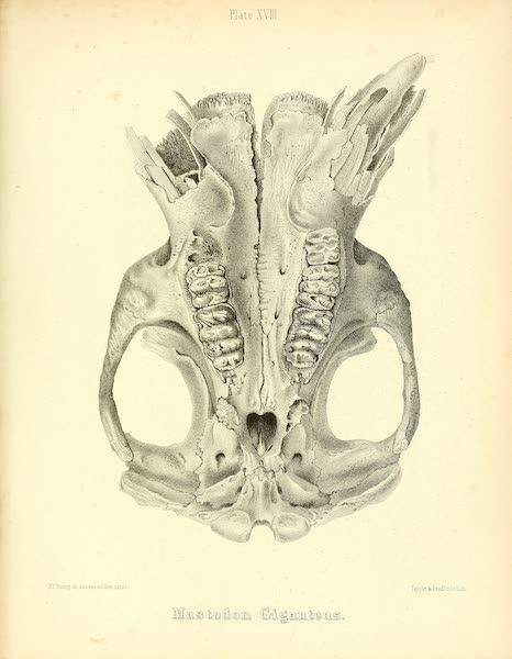 The Mastodon Giganteus of North America - Mastodon giganteus - Plate XVIII (1852)