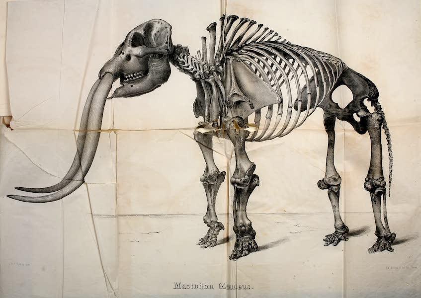 The Mastodon Giganteus of North America - Mastodon giganteus - Folding Plate (1852)