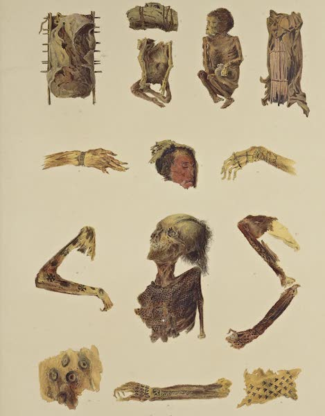 The Necropolis of Ancon Vol. 1 - Infant Mummies — Tattooed and painted limbs (1880)