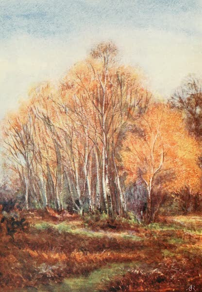The New Forest Painted and Described - Birches on the Brockenhurst Road, near New Park, November (1904)