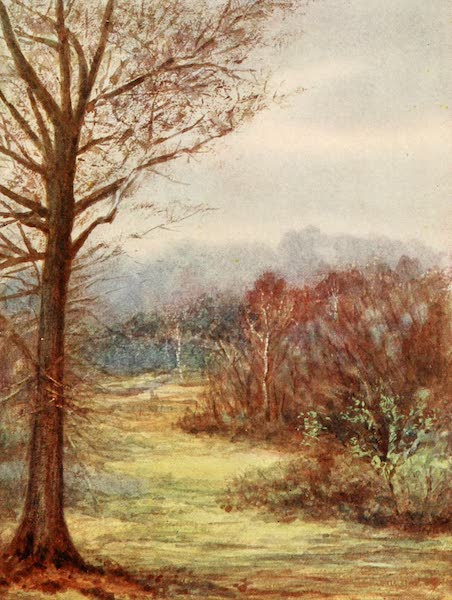 The New Forest Painted and Described - A Peep on the Brockenhurst Road. Early Spring (1904)