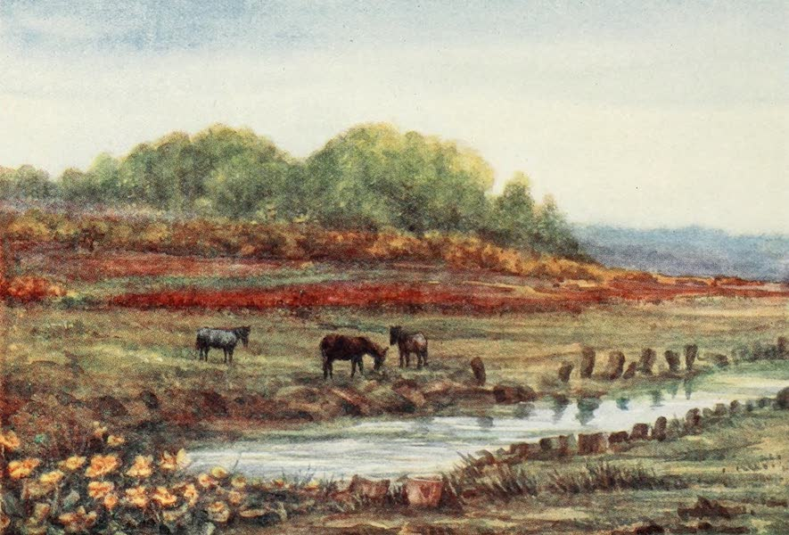 The New Forest Painted and Described - Matley Wood and Bog, from Matley Passage (1904)