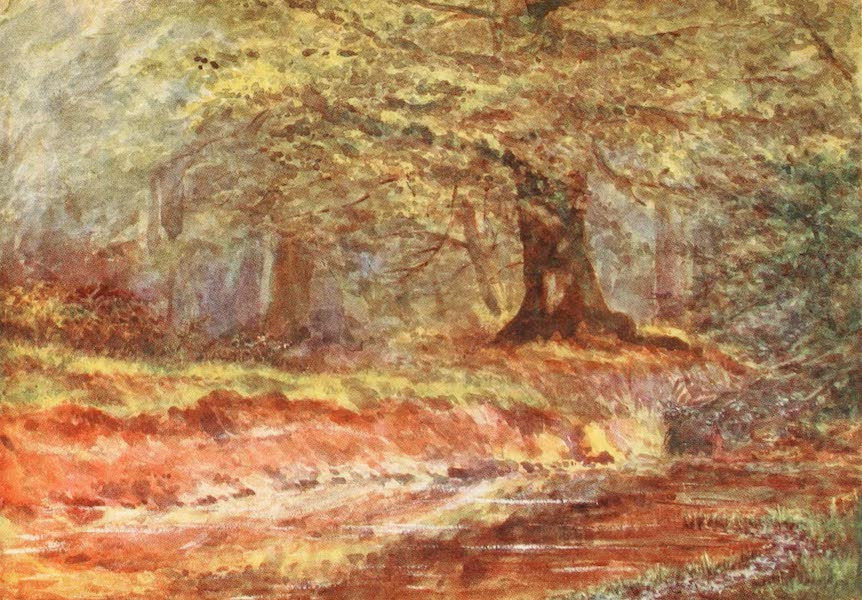 The New Forest Painted and Described - In the Queen's Bower. Midsummer (1904)