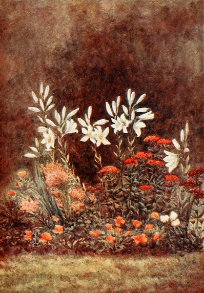 The New Forest Painted and Described - The Lily Border. July (1904)