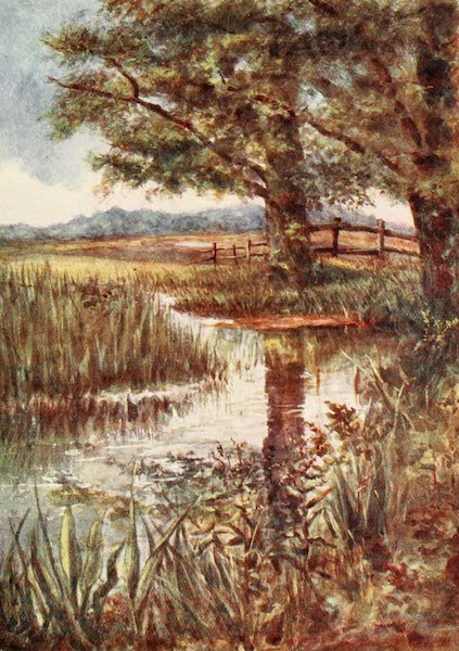 The New Forest Painted and Described - The Pond at Park Hill. July (1904)