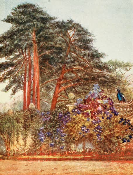 The New Forest Painted and Described - Scotch Firs and Garden Wall at Park Hill. Evening Light (1904)