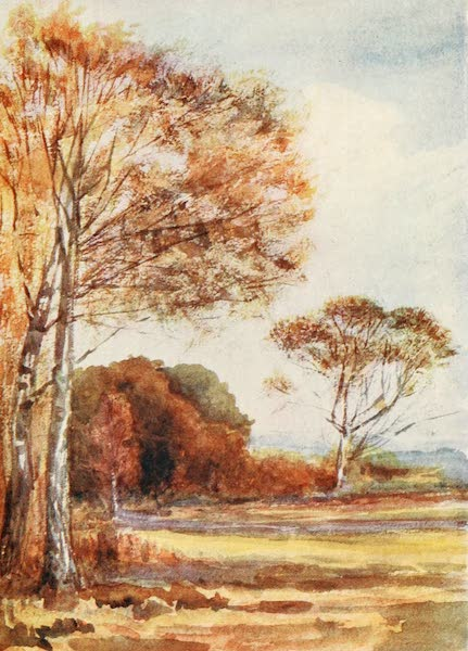 The New Forest Painted and Described - Below Park Hill, looking towards the Farm. October (1904)