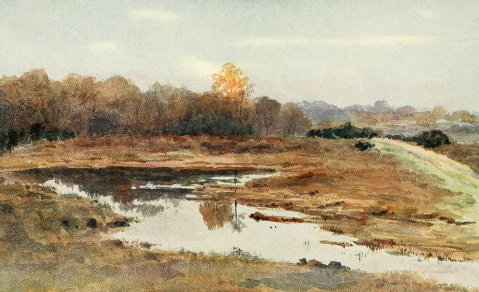 The New Forest Painted and Described - On the Beaulieu Road. A Wet October (1904)