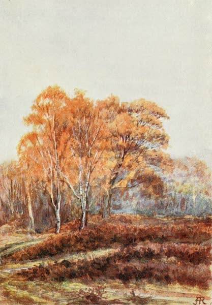 The New Forest Painted and Described - The Birches at Faircrop. Early November (1904)